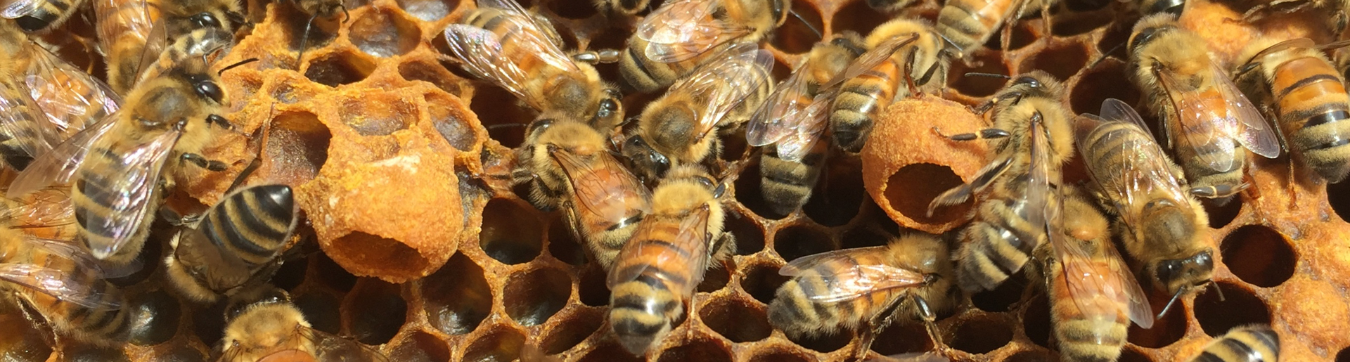 Welcome to Debzzz Beekeeping Paradise